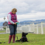 You and Your Dog Training courses