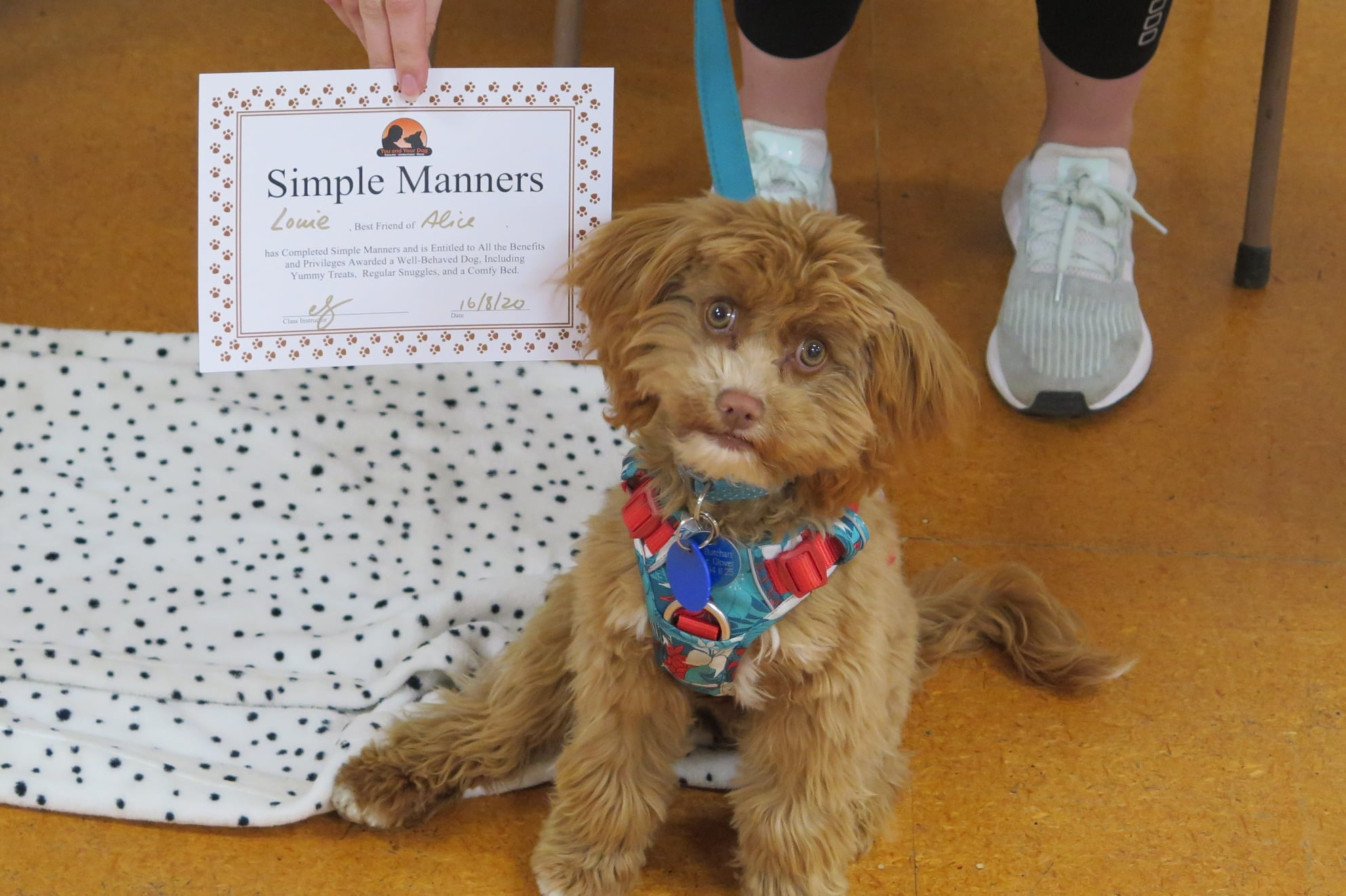 Simple Manners Dog Training Course Nelson Tasman
