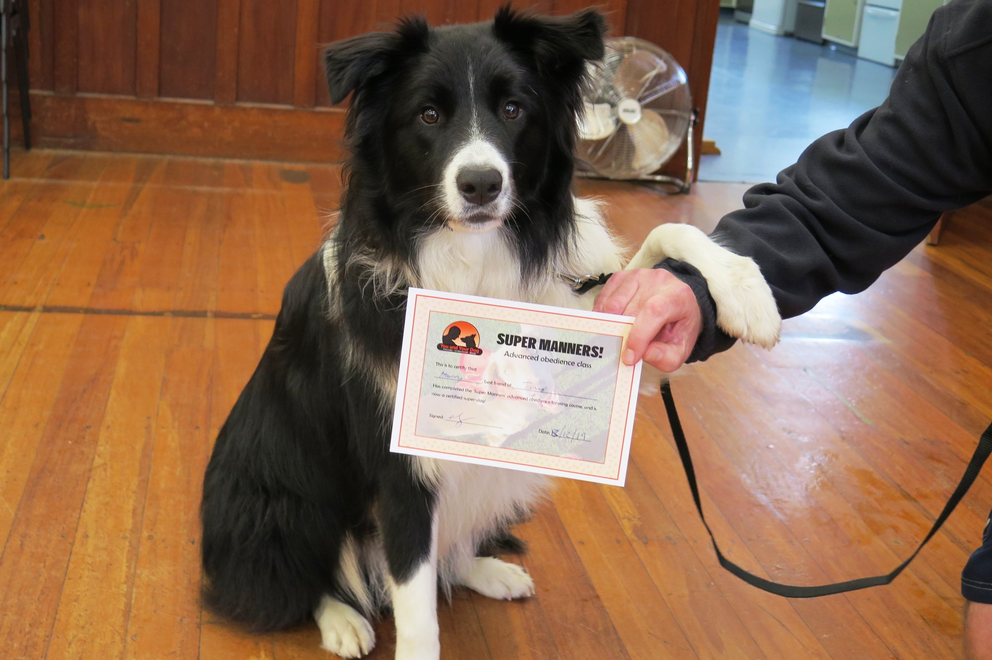 Super Manners Dog Training Course Nelson Tasman